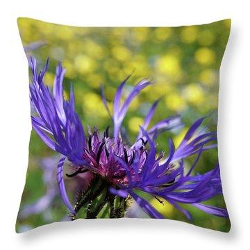 Centaurea Montana Flower Throw Pillow