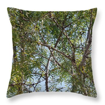 Throw Pillow featuring the photograph Central Texas Sky View Through Mesquite Trees by Ray Shrewsberry