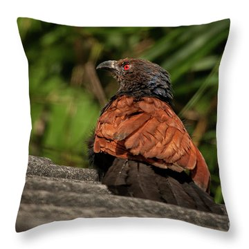 Centropus Sinensis Throw Pillow