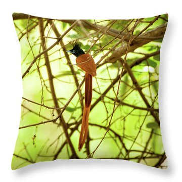 Ceylon Paradise Flycatcher Throw Pillow