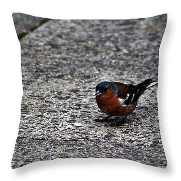 Chaffinch Throw Pillow