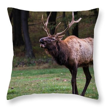 Challenger Throw Pillow