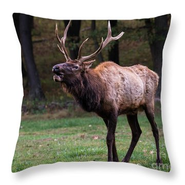 Throw Pillow featuring the photograph Challenger by Andrea Silies