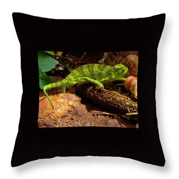 Chameleon Struts His Stuff Throw Pillow