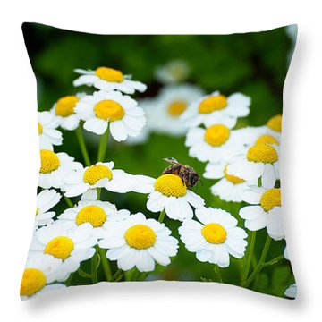 Chamomile Pollinating Throw Pillow