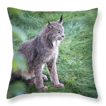 Throw Pillow featuring the photograph Champion Mama Lynx by Tim Newton