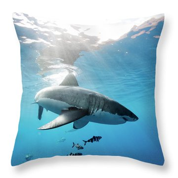 Change Of Direction Throw Pillow by Shane Linke