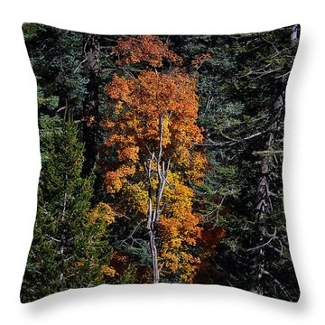 Change Of Seasons Throw Pillow