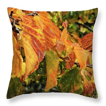 Throw Pillow featuring the photograph Changes by Peggy Hughes