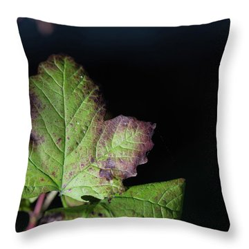 Throw Pillow featuring the photograph  Changing Color  by Jingjits Photography