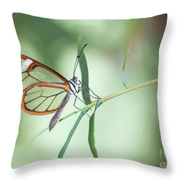 Charming Clear-wing Throw Pillow