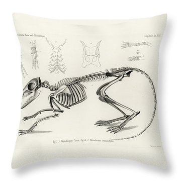 Checkered Elephant Shrew Skeleton Throw Pillow