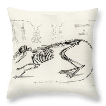Checkered Elephant Shrew Skeleton Throw Pillow