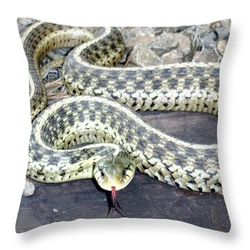 Checkered Garter Snake Throw Pillow