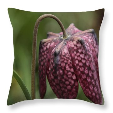 Checkers In The Field Throw Pillow