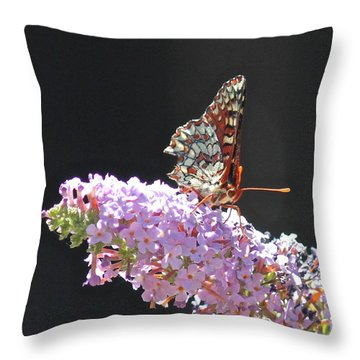 Checkerspot Butterfly Throw Pillow