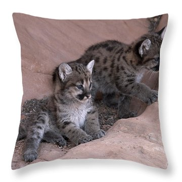 Checking It Out Throw Pillow by Sandra Bronstein