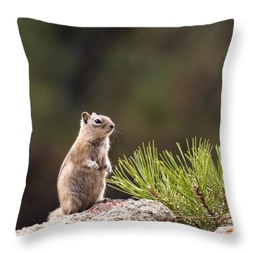 Throw Pillow featuring the photograph Checking Things Out by Monte Stevens