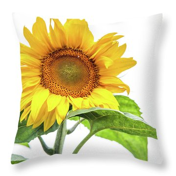 Throw Pillow featuring the photograph Cheerful Flower Cheerful Mood by Jenny Rainbow