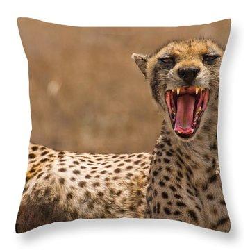Cheetah Throw Pillow by Adam Romanowicz