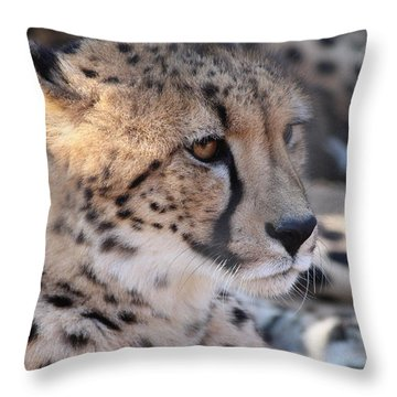 Cheetah And Friends Throw Pillow