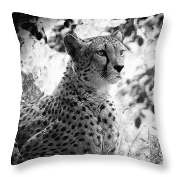 Cheetah B W, Guepard Black And White Throw Pillow