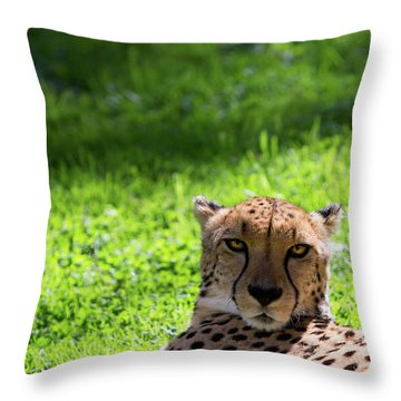 Throw Pillow featuring the photograph Cheetah Face by Rebecca Cozart
