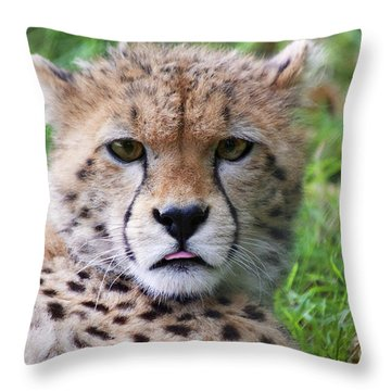 Throw Pillow featuring the photograph Cheetah by MGL Meiklejohn Graphics Licensing