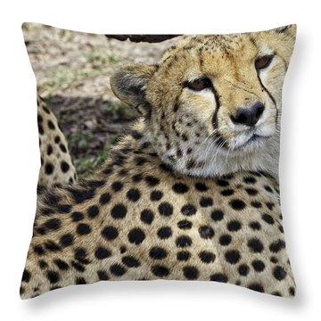 Cheetahs Resting Throw Pillow