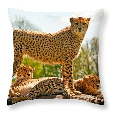 Cheetahs Three Throw Pillow