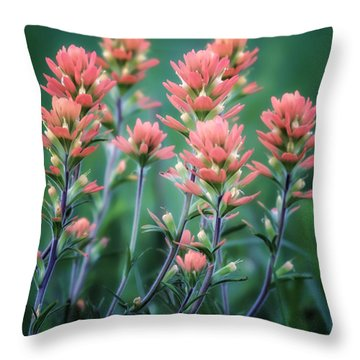 Cherokee Prairie Paintbrush Throw Pillow by James Barber