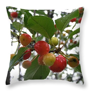 Throw Pillow featuring the photograph Cherries In The Morning Rain by Angie Rea