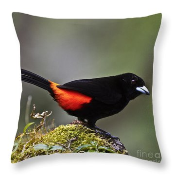 Cherrie's Tanager Throw Pillow by Heiko Koehrer-Wagner