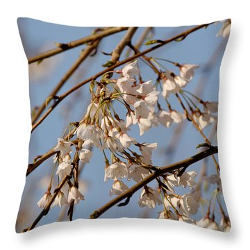 Cherry Blossoms Throw Pillow by Julie Niemela