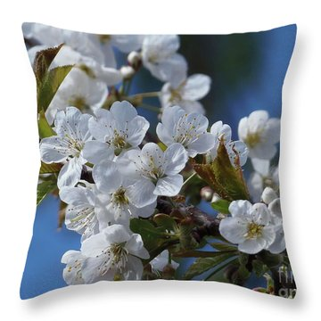 Throw Pillow featuring the photograph Cherry Blossoms by Victor K
