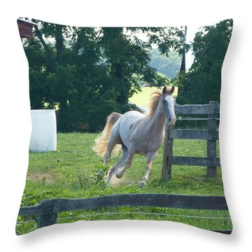 Chester On The Run Throw Pillow by Donald C Morgan