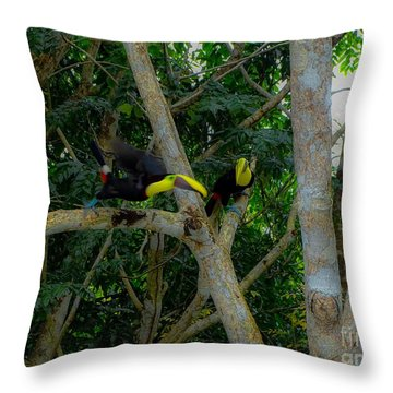Chestnut-mandibled Toucans Throw Pillow