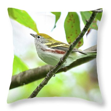 Throw Pillow featuring the photograph Chestnut-sided Warbler by Lara Ellis