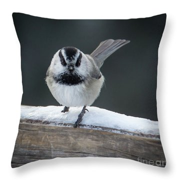 Chic At Big Springs Wildlife Art By Kaylyn Franks Throw Pillow