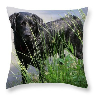Throw Pillow featuring the photograph Chicago 0121 by Guy Whiteley