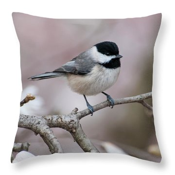 Throw Pillow featuring the photograph Chickadee - D010026 by Daniel Dempster
