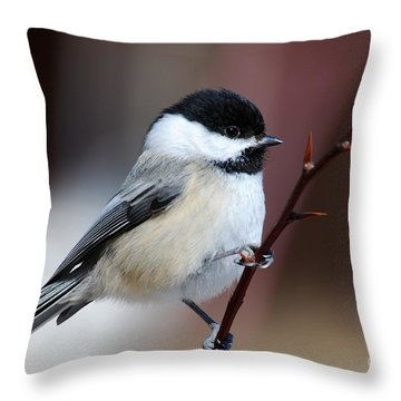 Chickadee Dee Dee Throw Pillow by Sandra Updyke