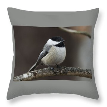 Chickadee Throw Pillow by Diane Giurco
