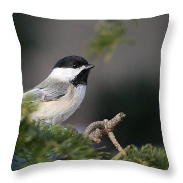 Throw Pillow featuring the photograph Chickadee In Balsam Tree by Susan Capuano