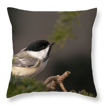Throw Pillow featuring the photograph Chickadee In The Shadows by Susan Capuano
