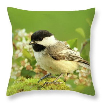 Chickadee Mossy Spring Perch Throw Pillow by Max Allen