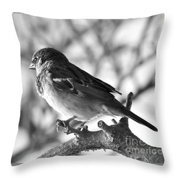 Chickadee Throw Pillow by Sheila Ping