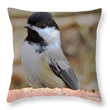 Chickadee's Winter Reverie Throw Pillow