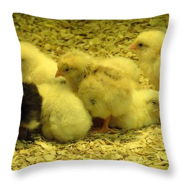 Chicks Throw Pillow