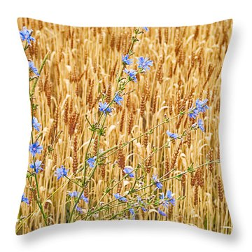 Chicory On Wheat Throw Pillow by Peter J Sucy